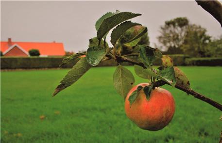 Frugterne-billede-3